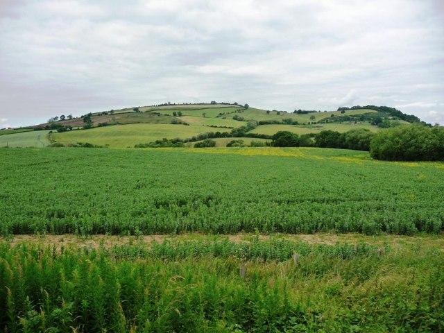 Large field, perhaps a bean crop
