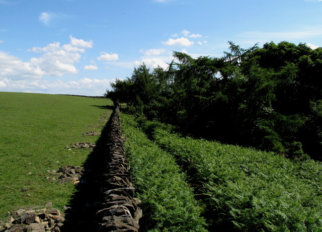 Dry Stone Wall with Footpath & Field