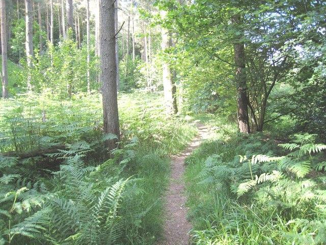 Footpath through Crow Wood