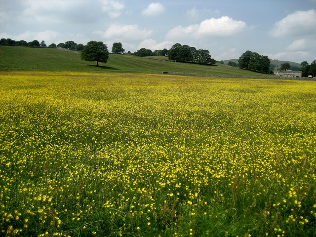 Buttercups in Threshfield