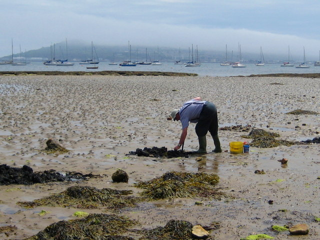 Digging for Lugworms - Castle Cove