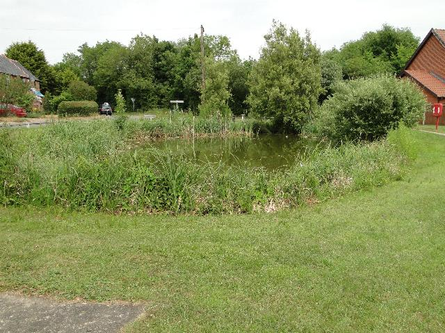 Pond at Toft Monks, Norfolk