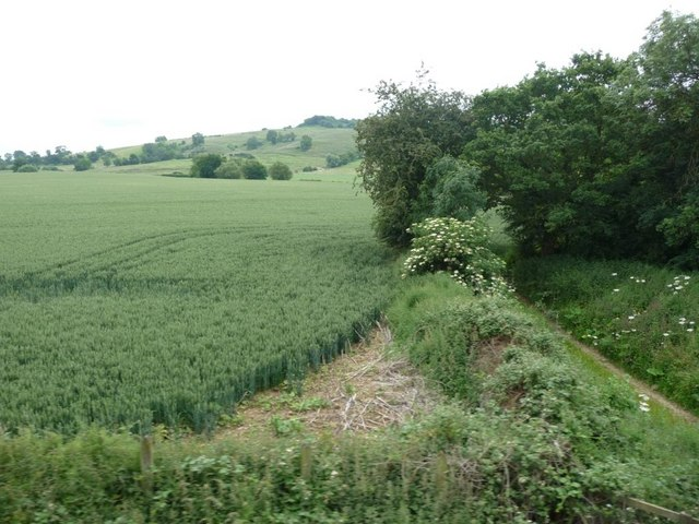 Wheat field and footpath