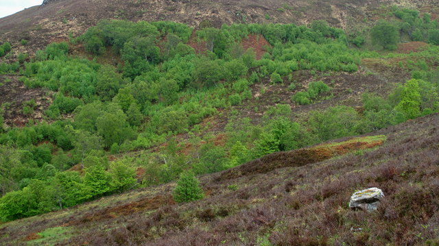 Regenerating Woodland  about the Allt na Dalachmoire