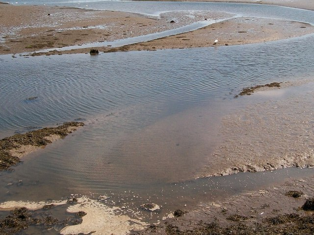 Wading birds on mud banks at Pwllheli harbour