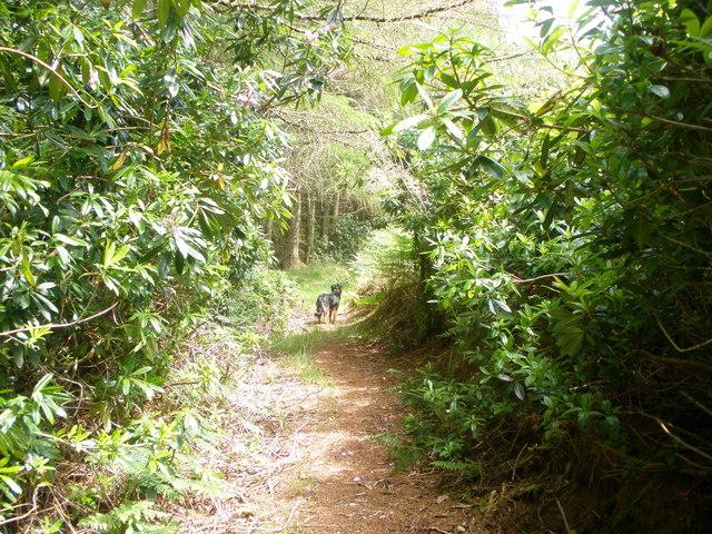 Right of way from Kilfinnan to Tighnabruaich