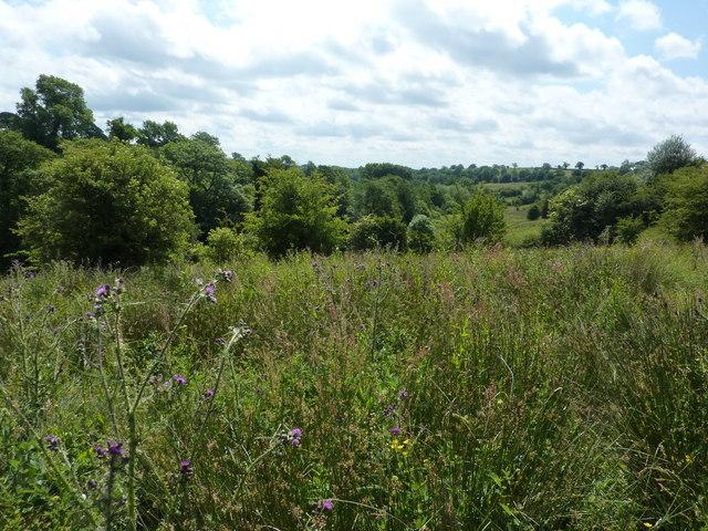 Scrubby woodland between Thorpe and Fenny Bentley