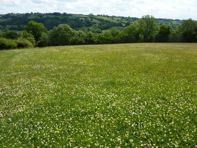 Meadow above Fenny Bentley