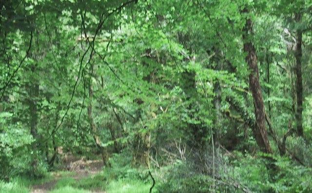Blackaton Wood