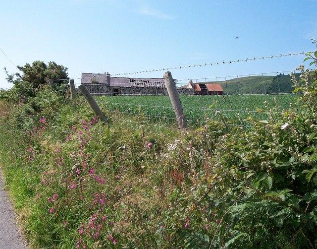 Hedgerow flowers near the ruined Cae-newydd farm buildings