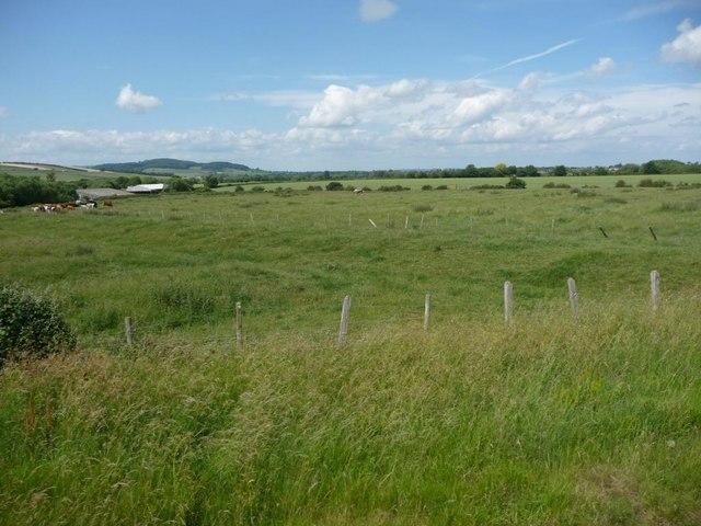 Pasture between the railway and Ireley Farm