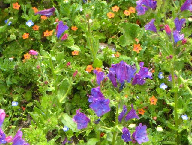 Wild flowers at Boscregan
