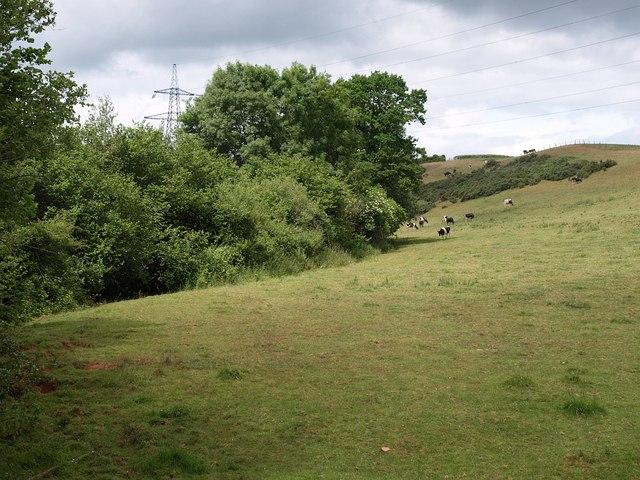 Field near Beardley Farm