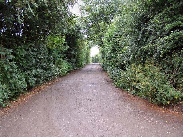 Lane towards Whittle Fold Dairy