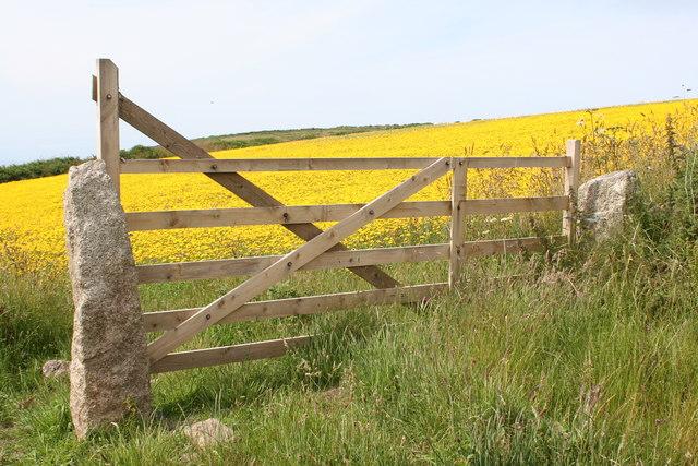 Field gate at Boscregan