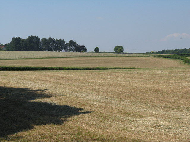 Silage and hay fields south of Woodcote Farm
