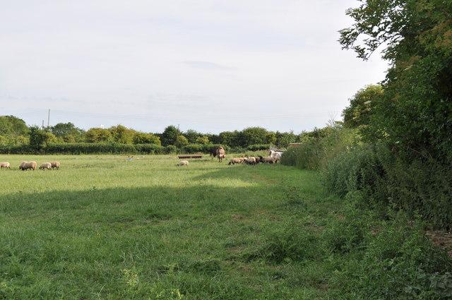 Farm fields at Sedbury