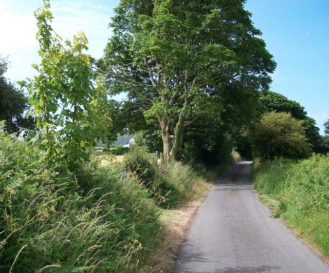 Lon Ffridd just north of Ty Newydd