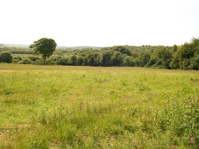 View south-eastwards across pasture land towards woodland
