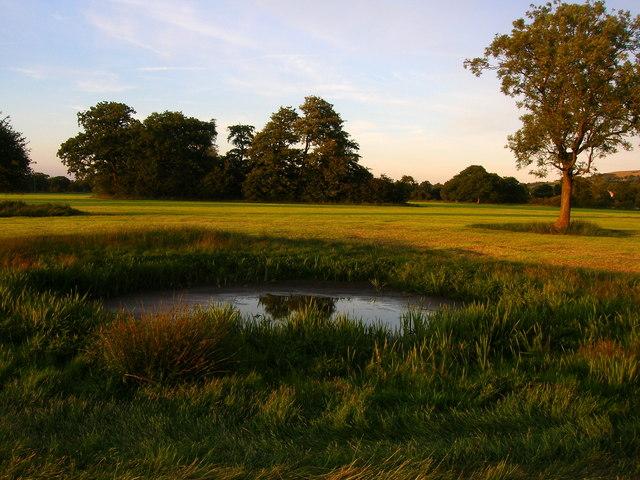 Pond in evening sunlight