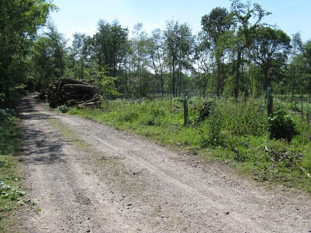 Logpile on woodland track Hoyle Copse