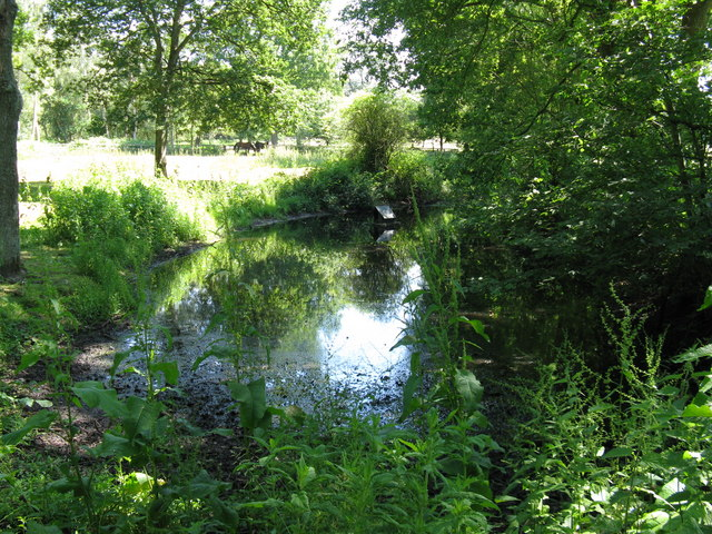Pond by footpath at Hoyle Farm