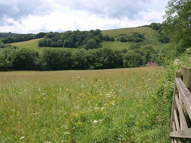 Field above Waterrow Copse