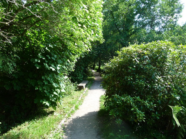 Canonteign Falls : Lilly Lake Path