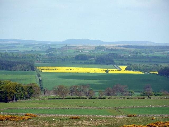 Fields between Middleton & Scot's Gap