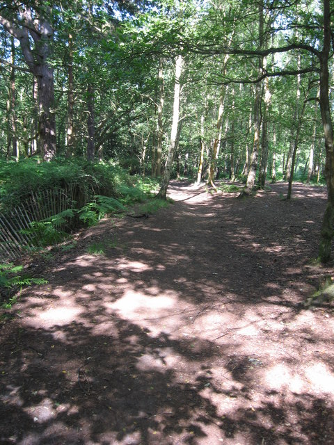 Footpath in the woods on Pyrford Common