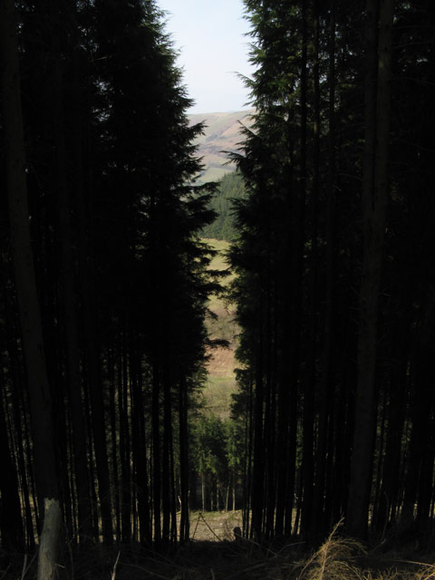 Slot in the forest
