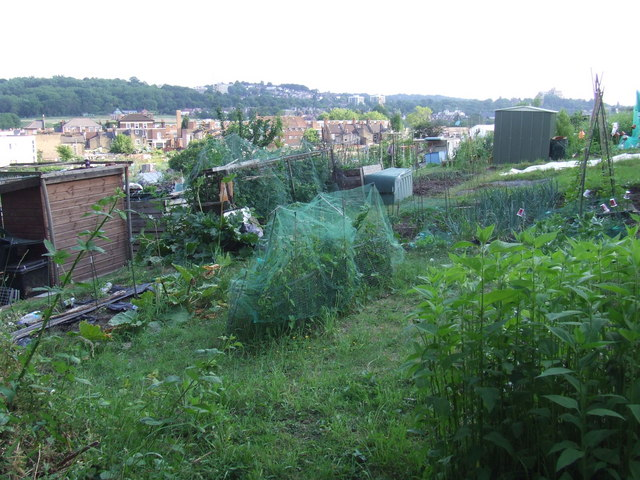 Allotments in Brockley