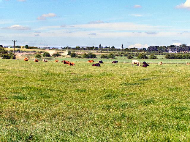 Farmland at Birch