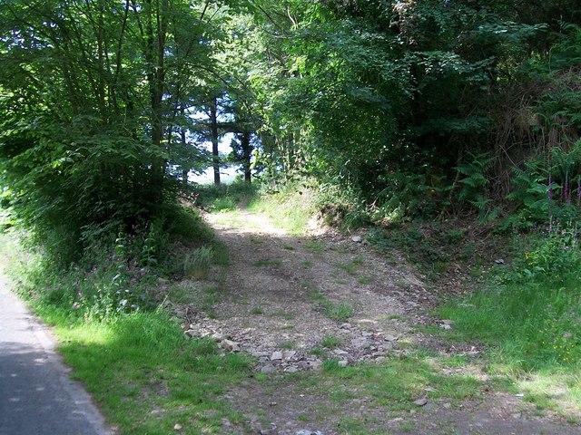 Woodland track at Coed Mynydd-Meilian