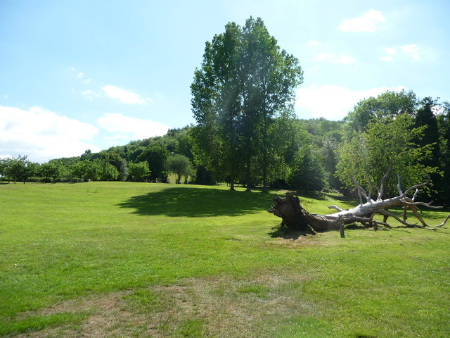 Canonteign Falls : Fallen Tree & Grass