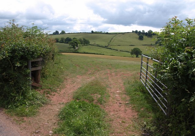 Gate and field, Higher Barn
