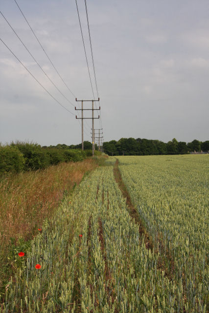 Wheat field near Exning