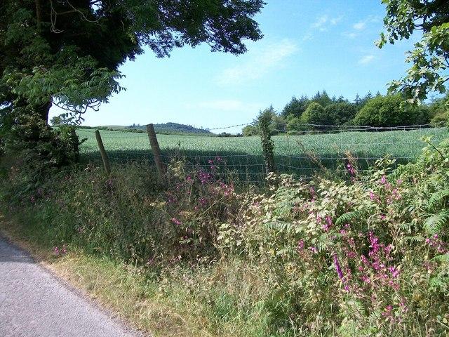 Crop field south of Coed Mynydd-Meilian