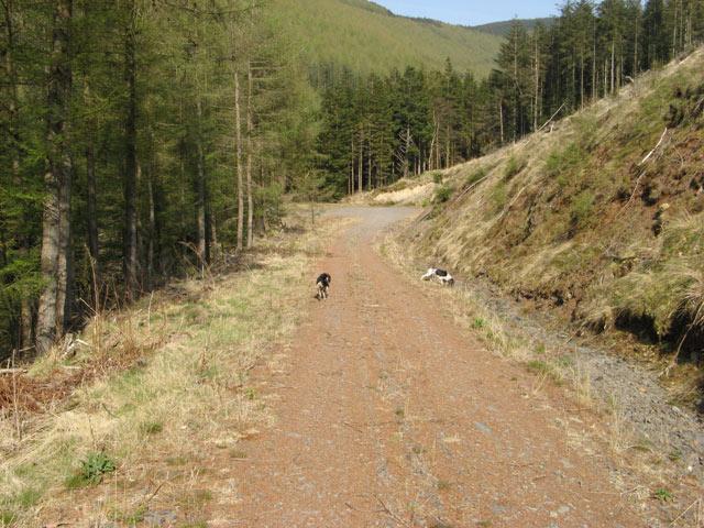 Forest road, Nant Llyn Coch-hwyad