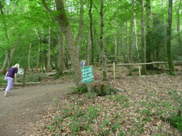 Canonteign Falls : Uphill Path