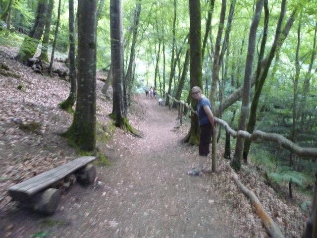 Canonteign Falls : Woodland Path