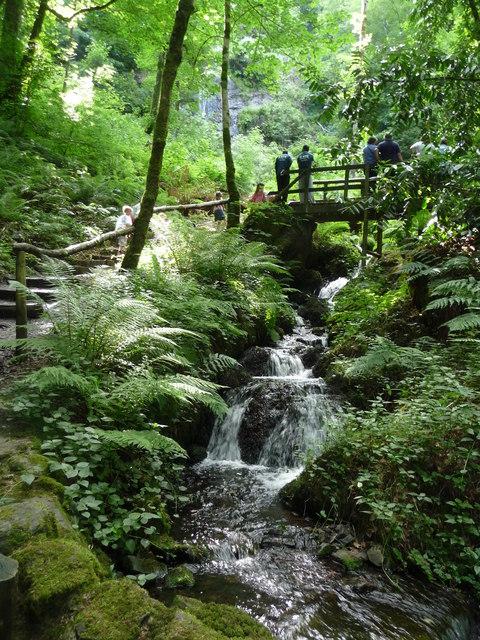 Canonteign Falls : Stream & Path