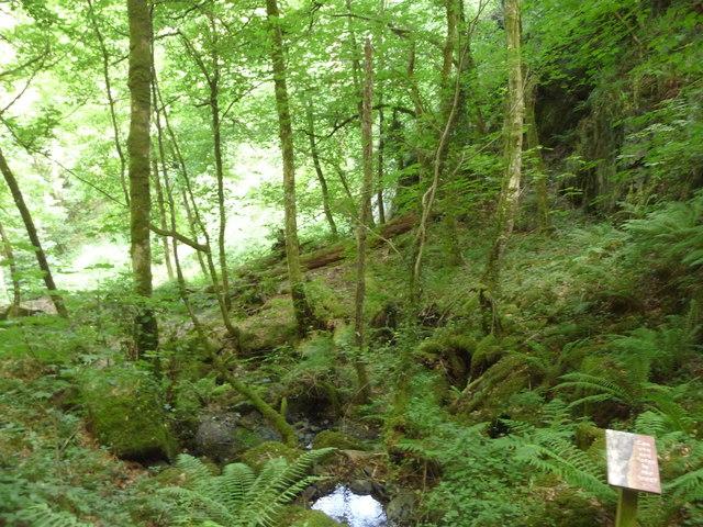 Canonteign Falls : Trees & Woodland