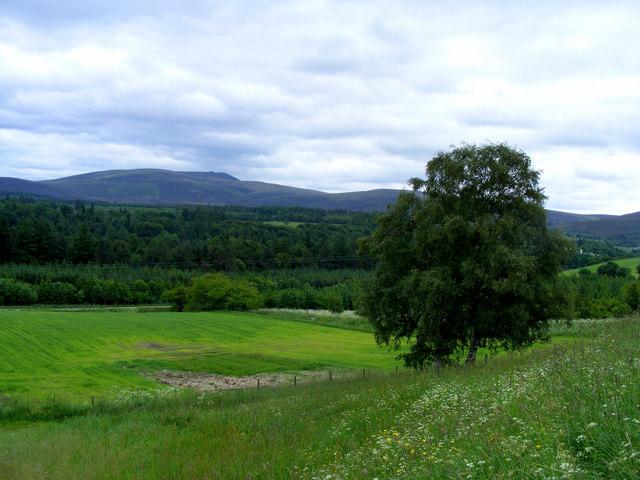 Looking towards Delnapot Hill