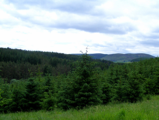 The  Forest  near Mullachard