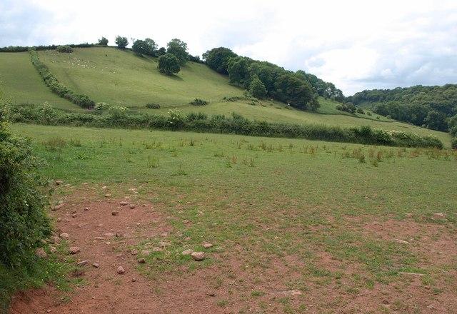 Hillside near Gipsy Cross