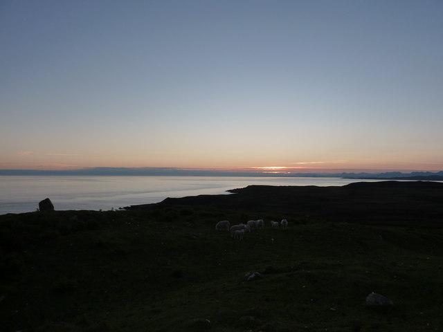 Sheep at 4:27 a.m., 22nd June
