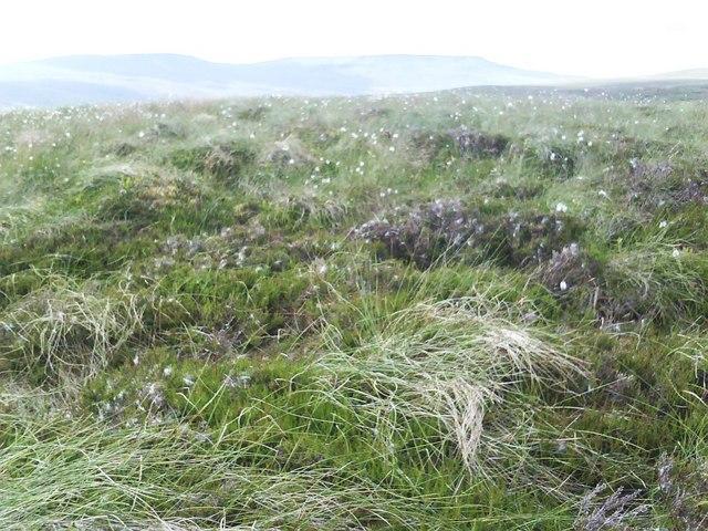 Top of Tarn Hill