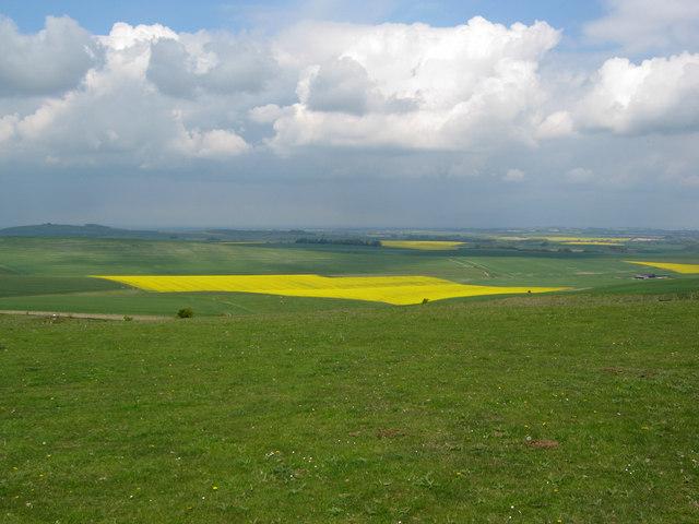 Downland north of Milk Hill