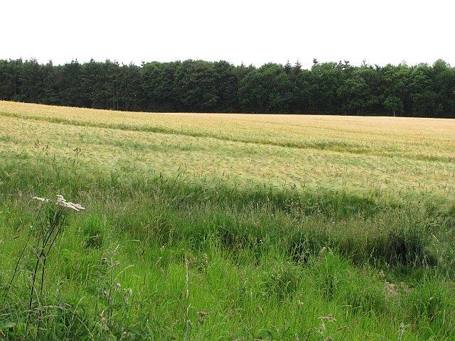 Barley, Mertoun
